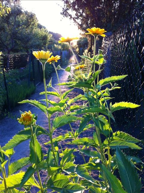 Blumen in der Abendsonne