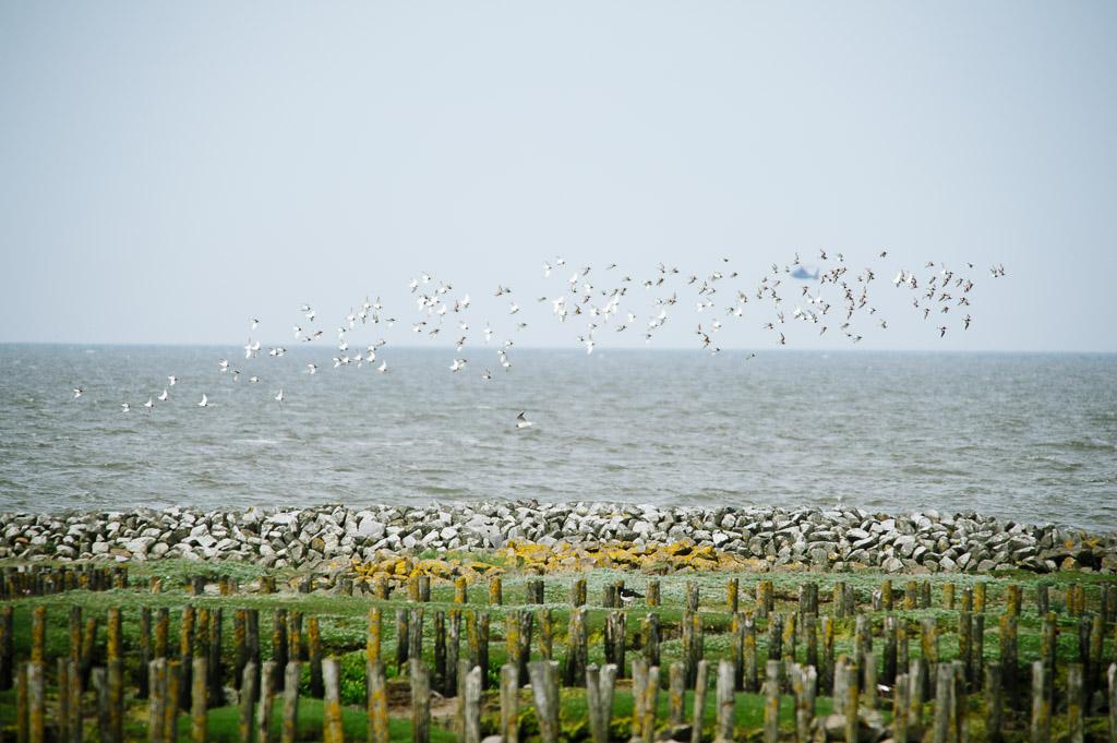 Suchbild mit Vögeln