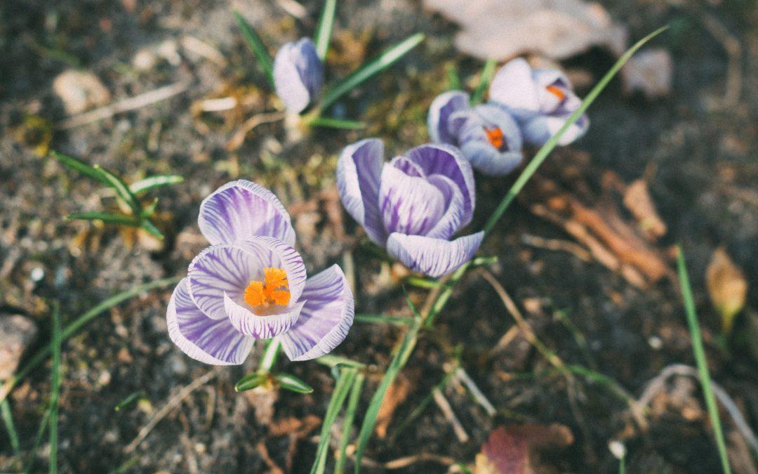 erster Tag im Garten nach dem Winter