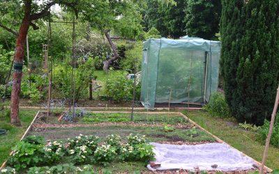 Tomatenhaus und Beeteinfassung