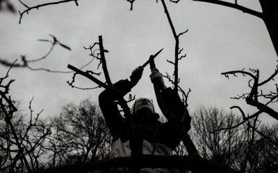 Erster Besuch im Garten im neuen Jahr – Baumschnitt