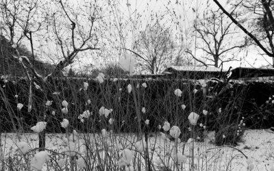 Besuch im Garten bei Minusgraden